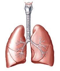 Unidad Pulmonar